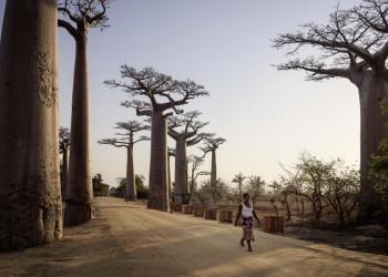 """Madagaskar, der """"achte Kontinent"""""""