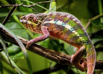 Flora und Fauna auf Madagaskar