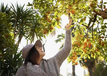 Orangenbäume in Andalusien
