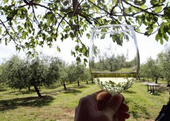 Weinprobe auf der Insel Brac