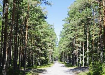 Wald im Lahemaa-Nationalpark