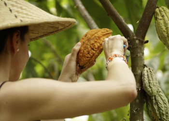 Exotische Früchte auf Bali