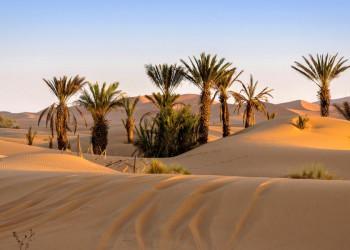 Oase in Merzouga Marokko