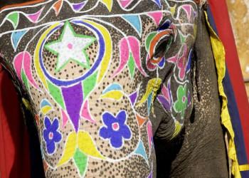 Bunt bemalter und geschmückter Elefant in Rajasthan