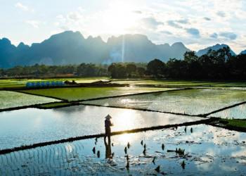 Reisbauer im Mekongdelta