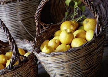Frische Zitronen von den Äolischen Inseln