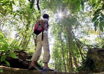 Wanderer im Dschungel von Südthailand