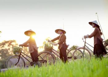 Vietnamesinnen auf den Reisfeldern