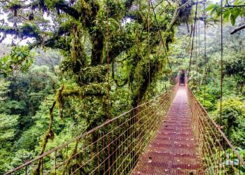 Auf Hängebrücken durch den Nebelwald in Costa Rica