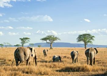 In der Weite der Serengeti