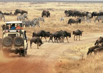 Gnus und Zebras im Ngorongoro-Krater