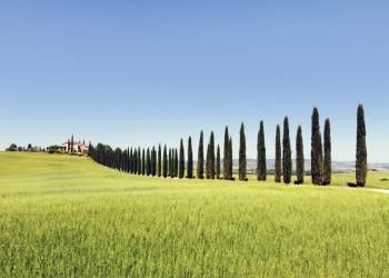 Zypressenallee in der Toskana