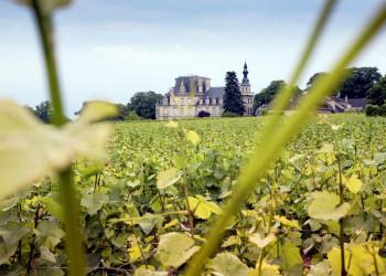 Weinberg im Burgund, Frankreich