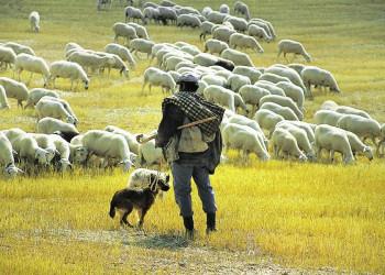 Ein Schäfer mit seiner Herde in Kastilien