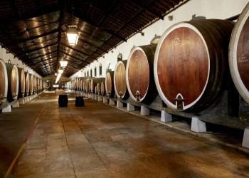 Im Baskenland verkosten wir Weine in einer Bodega.