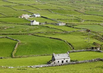 Steinmauern auf einer Weide in Irland