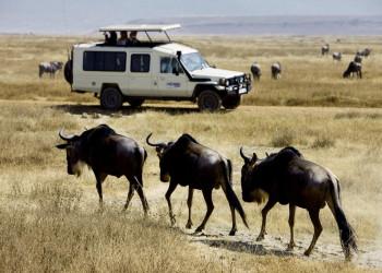 Tierische Begegnungen mit Gnus im Ngorongoro-Krater