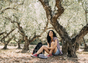 Ständige Begleiter auf Kreta: Olivenhaine