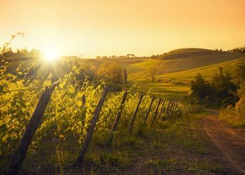 Das Chiantigebiet in der Toskana - ideal zum Wandern und entspannen.