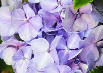 Blüten auf den Azoren
