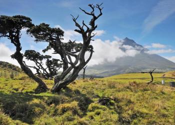 Landschaft auf der Insel Pico, Azoren