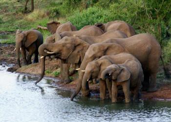 Elefanten an einer Wasserstelle auf unserer Safari