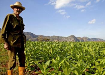 Kubanischer Tabakbauer vor seinem Feld