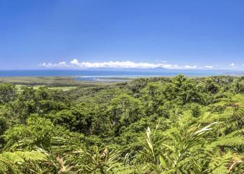 Regenwald-Feeling im Daintree-Nationalpark in Australien