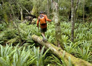 Ein Wanderer im Fjordland-Nationalpark auf der Südinsel Neuseelands