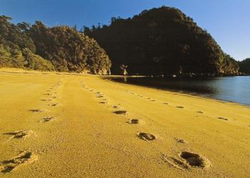 Sandstrand im Abel-Tasman-Nationalpark, Neuseeland