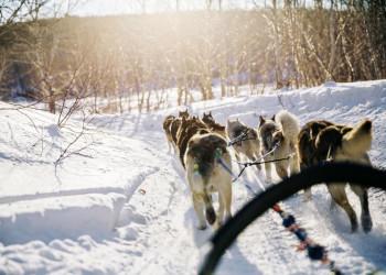 Ein Highlight unserer Reise: Mit dem Hundeschlitten durch die Wildnis!