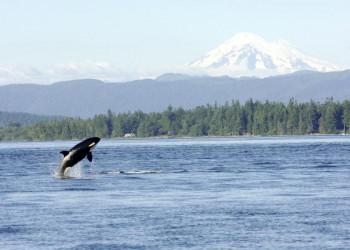 Natürlich dabei: die Gelegenheit zum Whale-Watching mit Orca & Co.