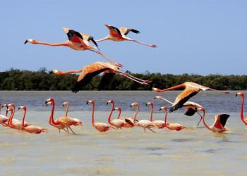 Flamingos auf der Spur im Biosphärenreservat Rio Lagartos