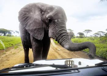 Unterwegs in Tansania - immer schön in Zurückhaltung üben!