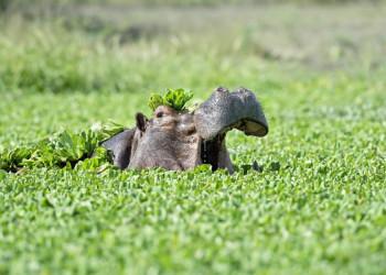 Aufgepasst bei unserer Bootstour im iSimangaliso Wetland Park!