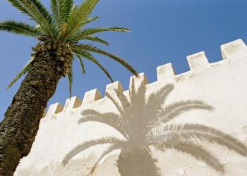 Schattenspiel mit Palme in der weißen Königsstadt Rabat
