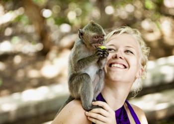 Die Affen auf Bali - immer für einen Leckerbissen zu haben