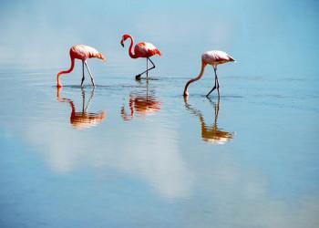 Flamingos im Biosphärenreservat Rio Lagartos in Mexiko