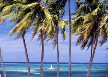 Palmenstrand wie aus dem Bilderbuch auf Kuba