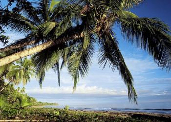 Palmenstrand wie aus dem Bilderbuch am Karibischen Meer