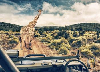 Giraffe in der afrikanischen Savanne