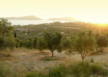 Die sanfte Landschaft rund um Kalamata in der Abendstimmung