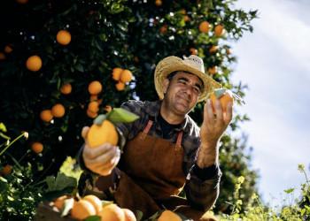 In Kolossi erwartet uns frisch gepresster Orangensaft.