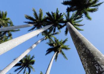 Palmen sorgen für Karibikflair auf Kuba