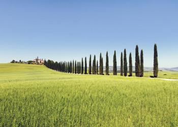 Wie gemalt: die Toskana mit ihren Zypressenalleen und weiten Landschaften
