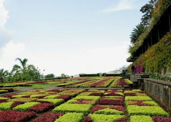 Der botanische Garten in Funchal, Portugal
