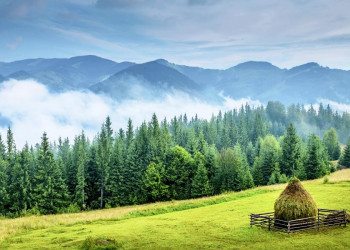 Endlose Wälder und Karpatengipfel in Rumänien