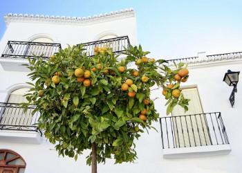 Der Duft der Orangenbäume begleitet uns durch Andalusien
