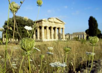 Eine Augenweide - die Tempel von Paestum