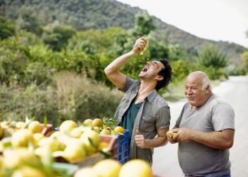 Nach der Orangenernte ist vor der Erfrischung!